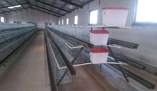 阶梯式蛋鸡笼
