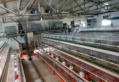 阶梯式鸡笼